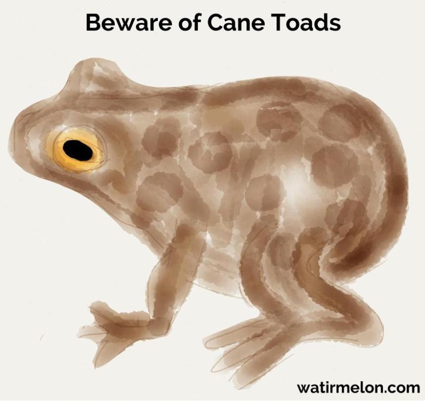 Beware of Cane Toads